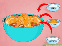Ways To Quickly And Easily Get Rid Of Fruit Flies - Small flies in kitchen sink