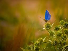 beautiful butterfly photos beautiful butterflies butterflies