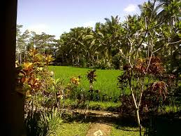 guest house arjana rice field ubud indonesia booking com