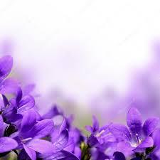 spring flower violet stock photos royalty free violet images depositphotos