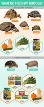 Tortoise Home Decor Best 25 Tortoise Ideas On Pinterest Pet Turtle Baby Tortoise