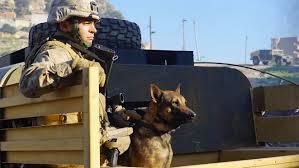 belgian shepherd us army megan leavey official site