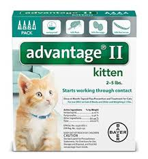 Bed Bugs On Cats Advantage Ii For Cats Product Details Application U0026 Faqs