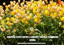 poisonous plants for dogs pampered pooch parties u0026 barkery treats