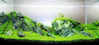 japanese aquascape enrico fortuna aquascaping aquascape pinterest aquascaping