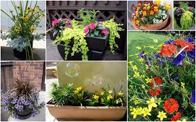 Plant Combination Ideas For Container Gardens Best Flower Garden Groupings For Beautiful Combination Plantings