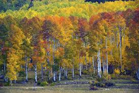 Colorado Tourism Map by Leaf Peeping In Colorado A Road Trip Itinerary Through Aspen