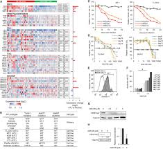 Atl Map Polycomb Dependent Epigenetic Landscape In T Cell Leukemia