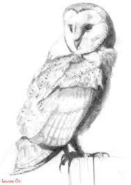 barn owl sketch by youareababeox on deviantart
