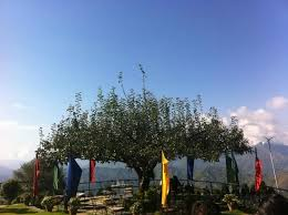 the special tree with 360 view picture of pataleban vineyard
