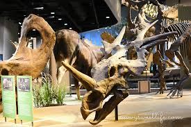 mammoth debut at the perot museum giveaway savvy sweet