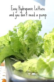 Hydroponics Vegetable Gardening by Best 20 Hydroponic Lettuce Ideas On Pinterest Diy Hydroponics