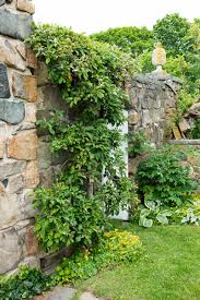 garden wall plants nurturing a historic seacoast family garden new hampshire home