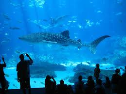fish tank sharks in home aquariumhome aquarium for salehome