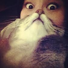 Cat Beard Meme - liam thinks cat beard meme takes the internet by storm