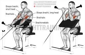 cable preacher curl exercise instructions and video