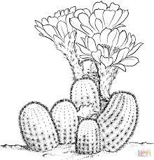 cactus coloring page fleasondogs org