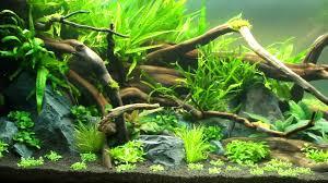 www aquascape com the nature style planted tank aquascape awards
