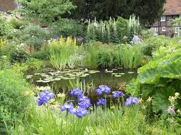 native uk pond plants bog gardens exsplained lilies water gardens