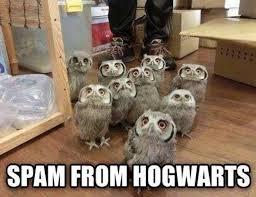 Spam Meme - spam from hogwarts again funny meme harrypotter humor