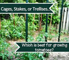 Types Of Patio Tomatoes Tomato Cages Stakes Or Trellises Which Is Best Homestead
