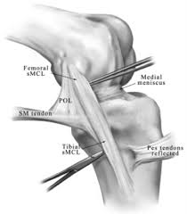 Diagram Of Knee Anatomy Ligaments Of The Knee Sports Orthobullets Com