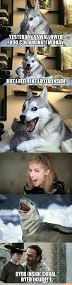 Dog Pun Meme - dyed inside funny funny pinterest memes humour and funny things
