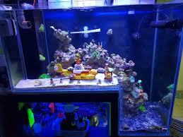 led reef aquarium lighting reef aquarium from malaysia under orphek led aquarium light orphek