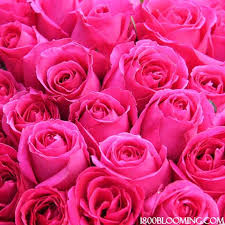 bulk roses wedding event diy bulk roses 1 800 blooming