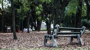 Park Bench Scene Free Images Man Landscape Sea Tree Nature Forest Outdoor