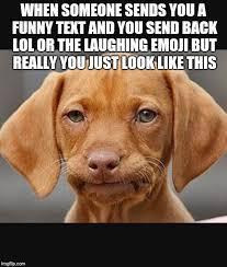 Orange Dog Meme - straight face dog memes imgflip