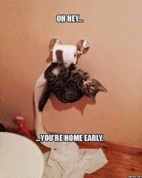Clean Cat Memes - cat memes clean meme central