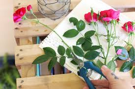 How To Design Flowers In A Vase How To Take Care Of Roses In Vases Hunker