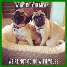 Image Flip Meme Generator - appealing lid manager flip pic of cute puppy meme generator styles