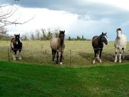 chambre d hote equitation présentation de randonnées équestres equitation de chambres d
