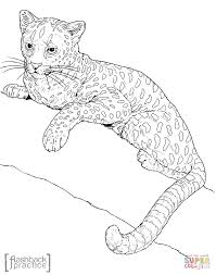 african golden cat coloring page free printable coloring pages