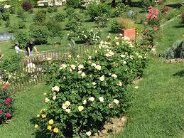 irises and roses u2013 espresso to prosecco