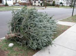 golocalprov providence curbside pick up of christmas trees