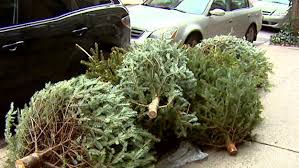dept of sanitation christmas tree recycling program begins monday