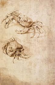 studies of crabs by leonardo da vinci