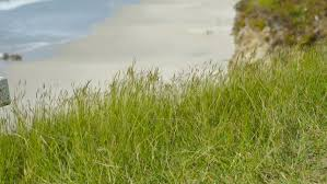 tombstone cost small bunch of grass beside sea cost line with horizon sky and
