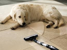 Dog Urine On Laminate Floors Flooring Best Flooring For Dogs With Dog Laminate Floor And