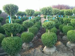Topiary Frames Wholesale The Topiary Plants Landscaping U0026 Backyards Ideas Best Of