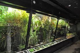 indoor large terrarium u2013 outdoor decorations