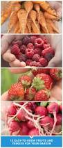 Patio Vegetables by Best 25 Easy Vegetables To Grow Ideas On Pinterest Easy To Grow