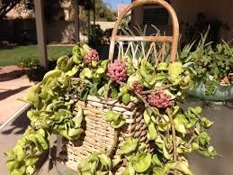 Fragrant Indoor House Plants - 11 best house plants for a child u0027sroom images on pinterest
