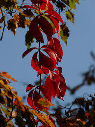 free images tree nature branch sunlight leaf flower red