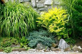 Shrub Garden Ideas 5 Garden Ideas You May Not Considered Gardening Flowers 101