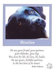 dog condolences best 25 loss of dog ideas on dog loss quotes dog