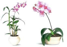 popular house plants u2013 hviezda club